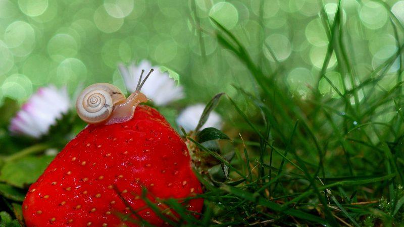 Entretenir son jardin et le décorer